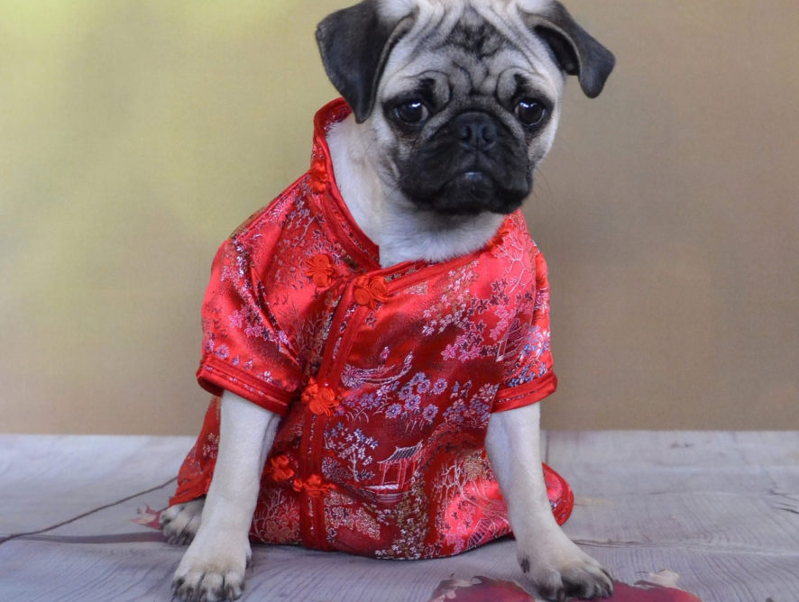 Best wishes for the Chinese New Year
